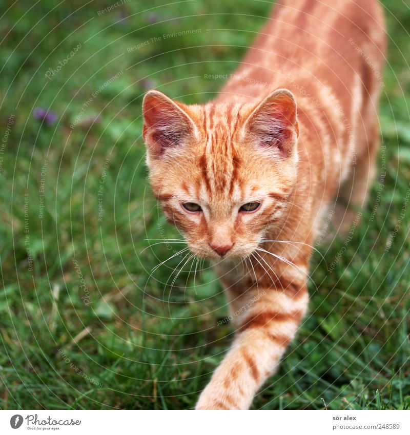 Green Animal Meadow Cat Orange Going Animal face Cute Curiosity Pelt Pet Striped Whisker Love of animals Creep Cat eyes