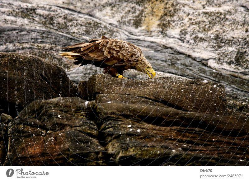 Nature Summer Animal Environment Cold Coast Exceptional Bird Rock Free Wild animal Power Stand Island Dangerous Threat