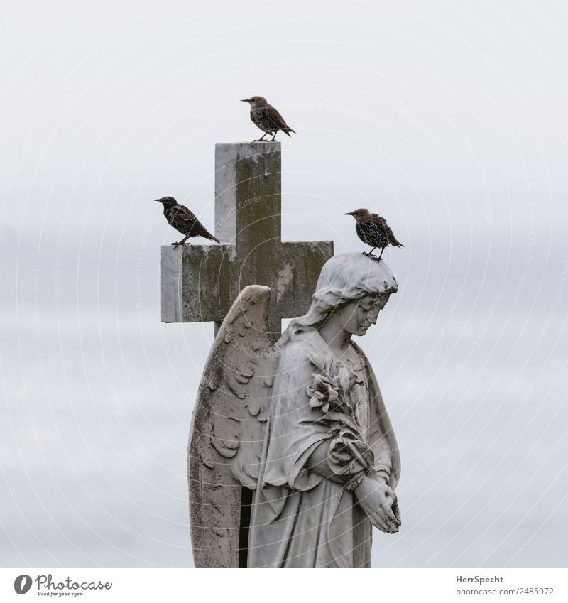 trio Animal Bird 3 Stone Sign Crucifix Angel Esthetic Exceptional Cold Reliability Gray Cemetery Grave Tombstone Statue Prayer Grief Starling Break Wait