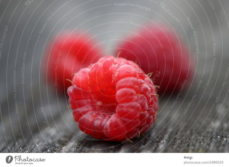 delicious raspberries Food Fruit Raspberry Wood Lie Esthetic Simple Fresh Healthy Small Delicious Natural Gray Pink Red 3 Colour photo Multicoloured