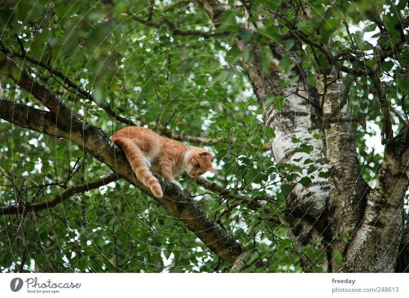 Nature Green Tree Leaf Animal Forest Garden Cat Park Fear Wait Dangerous Might Threat Pelt Hunting