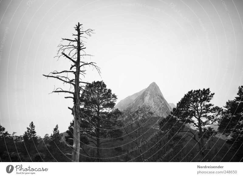 Nature Plant Tree Relaxation Landscape Calm Far-off places Forest Mountain Trip Climate Threat Elements Meditation Senses Set
