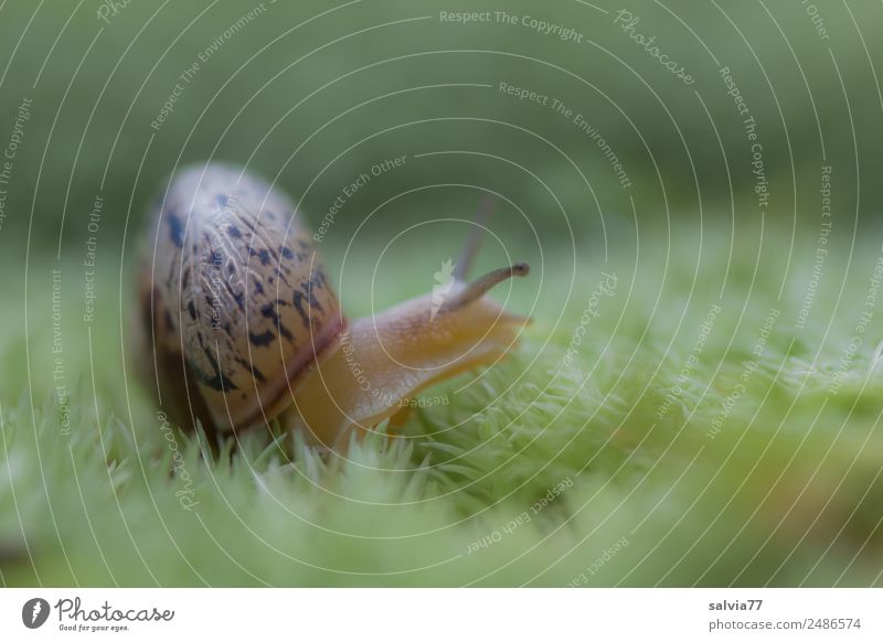 Nature Plant Green Animal Natural Lanes & trails Discover Soft Target Mobility Keyboard Moss Snail Crawl Feeler Slowly