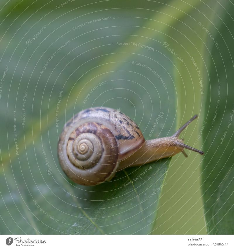 Bridging Environment Nature Plant Leaf Rachis Leaf green Animal Snail 1 Slimy Green Speed Mobility Perspective Protection Lanes & trails Target Ornament Spiral