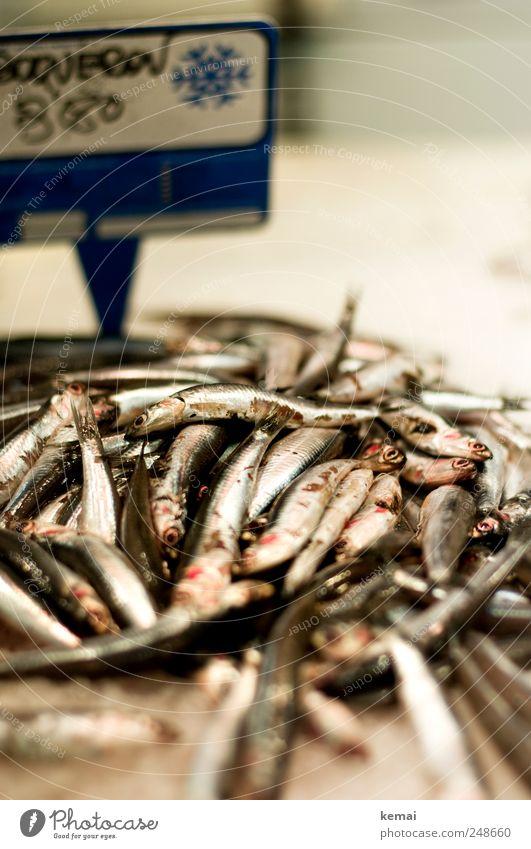 Animal Eyes Nutrition Glittering Lie Fish Fresh Animal face Many Silver Dinner Lunch Heap Farm animal Seafood