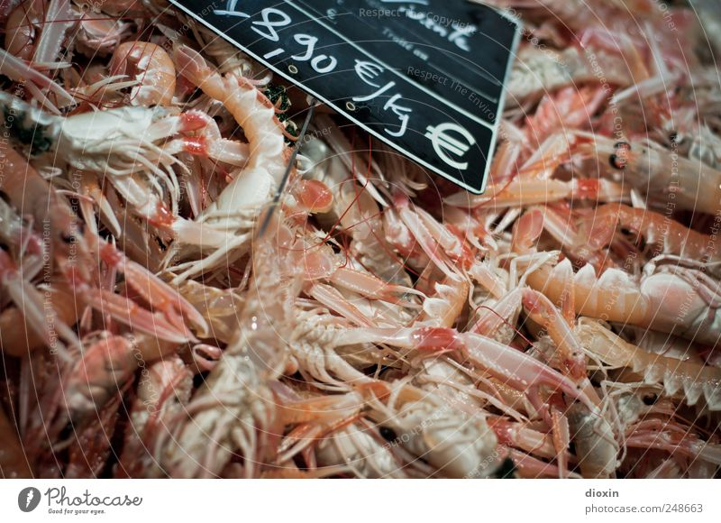 freshly caught Food Seafood Nutrition Crawfish Shrimps Crustacean Protein Delicacy Fish market Animal Dead animal Group of animals Flock Fresh Price tag