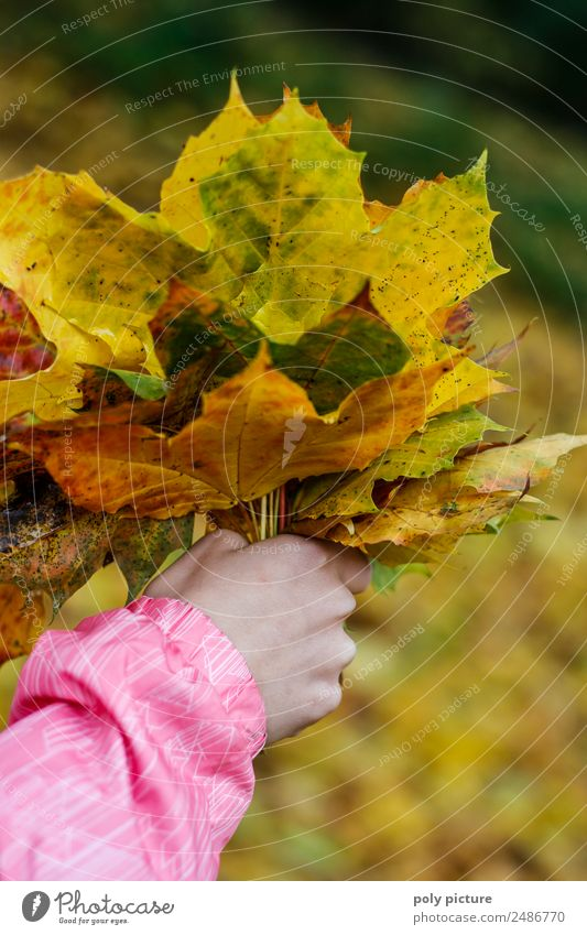 A child's hand holds a bouquet of leaves Child Toddler Family & Relations Infancy Youth (Young adults) Hand 3 - 8 years 8 - 13 years Environment Nature