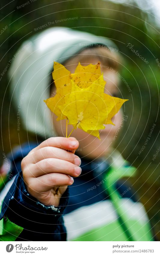 Small boy holding yellow autumn leaf in his hand Lifestyle Child Toddler Boy (child) Hand Fingers 1 - 3 years 3 - 8 years Infancy Environment Nature Summer
