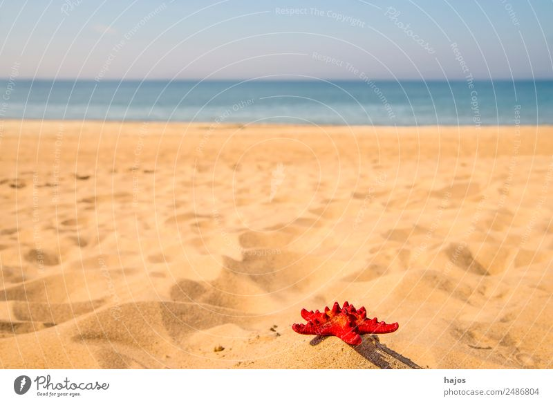 red starfish on the beach Vacation & Travel Summer Beach Sand Starfish Tourism Red Ocean Blue Sky White Empty Lonely Deserted Copy Space Colour photo