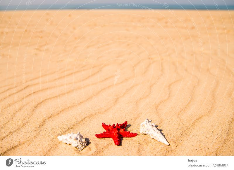 Sandy beach with starfish and snails Vacation & Travel Summer Beach Tourism Starfish Red Snail sea snails Housing Line Ocean Blue Deserted Lonely