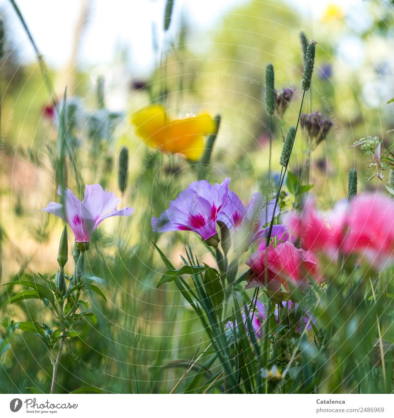 Nature Summer Plant Beautiful Green Flower Leaf Yellow Blossom Meadow Grass Pink Moody Growth Happiness Beautiful weather