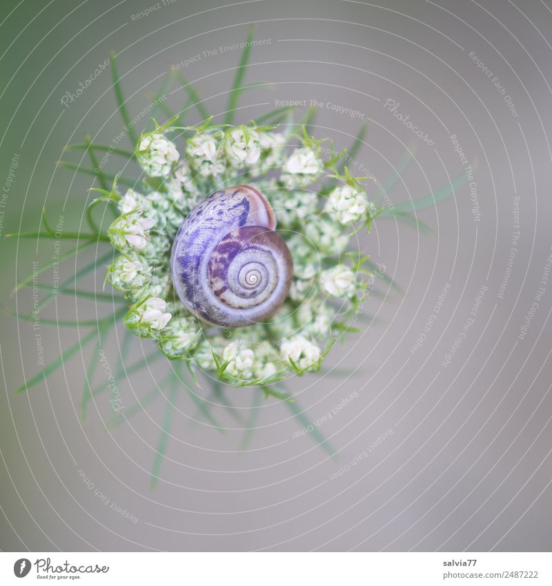 Nature Summer Plant Flower Animal Environment Blossom Meadow Garden Above Esthetic Round Protection Safety (feeling of) Snail Spiral