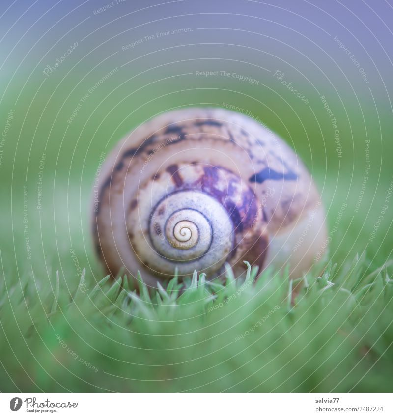 show home Nature Earth Plant Moss Forest Animal Snail Snail shell Ornament Round Soft Brown Green Design Center point Calm Protection Symmetry Pattern Spiral