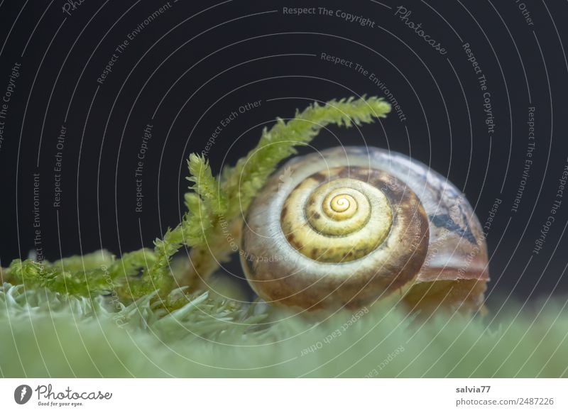Nature Plant Animal Environment Soft Protection Moss Safety (feeling of) Snail Spiral Symmetry Delicate Snail shell
