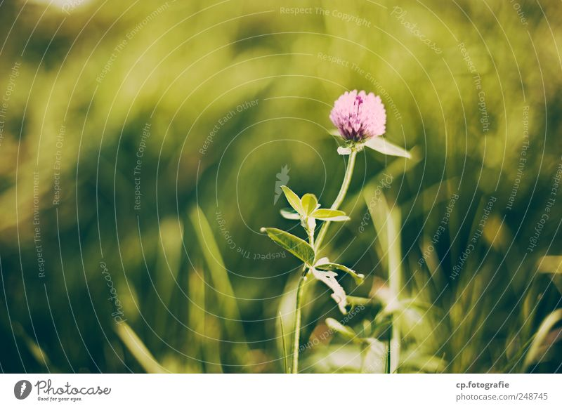 Plant Summer Meadow Garden Blossom Spring Park Beautiful weather Foliage plant Spring fever Emotions Calyx