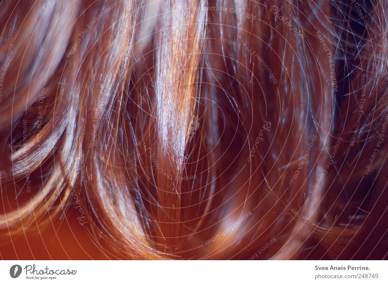 Hair and hairstyles Trashy Brunette Long-haired Red-haired Strand of hair Shock of hair