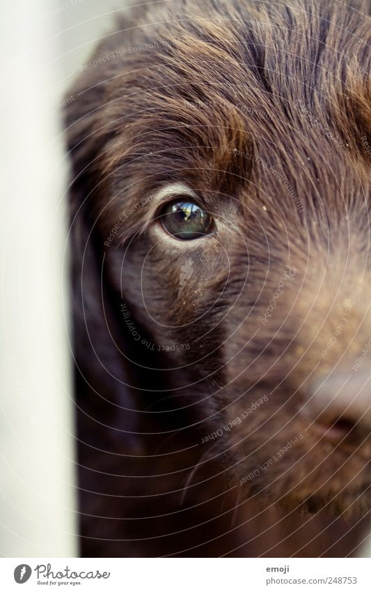 I'm in and you're out. Pet Dog Animal face 1 Brown Enclosed Captured Eyes Beg Sadness Animal shelter Colour photo Exterior shot Day Shallow depth of field