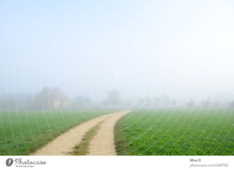 away into nowhere Calm Nature Landscape Clouds Fog Grass Meadow Field Bright Cold Shroud of fog Wall of fog Misty atmosphere Autumnal Lanes & trails Footpath