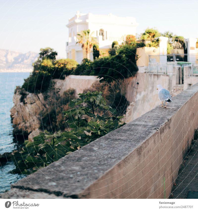 promenade de la mouette Animal Bird 1 Going Seagull Marseille Villa Wall (barrier) To go for a walk Corniche South Provence Mediterranean sea Southern France