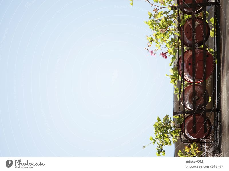 Sky Summer Flower House (Residential Structure) Window Wall (building) Above Garden Wall (barrier) Building Tall High-rise Esthetic Kitchen Manmade structures