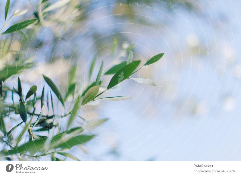 Nature Plant Green Garden Esthetic Beautiful weather Climate France Twig Mediterranean Olive Provence Olive tree Olive oil Olive grove Olive leaf