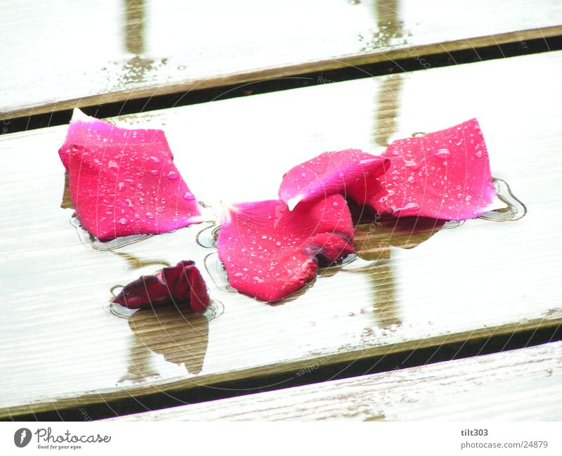rose petals Rose leaves rosy times