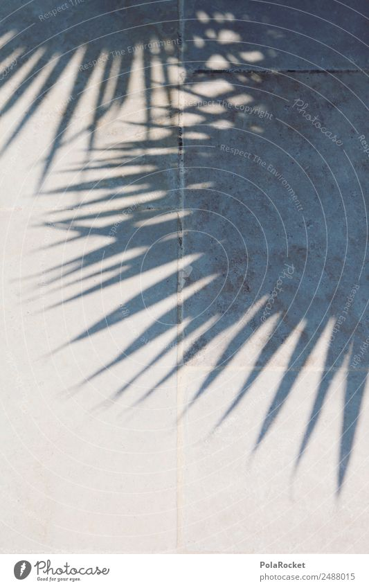 #A# Shadow Beings Climate Beautiful weather Esthetic Palm tree Palm frond Palm roof Paradisical Vacation & Travel Vacation photo Vacation mood