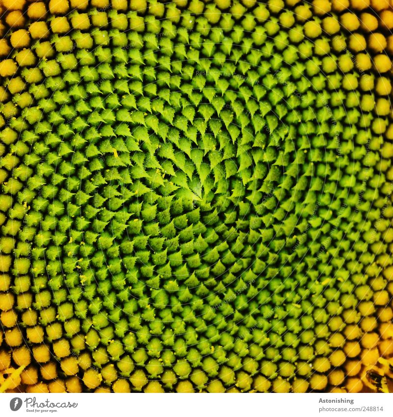 Nature Green Beautiful Plant Summer Flower Black Yellow Environment Field Gold Exceptional Kernels & Pits & Stones Sunflower Abstract Seed