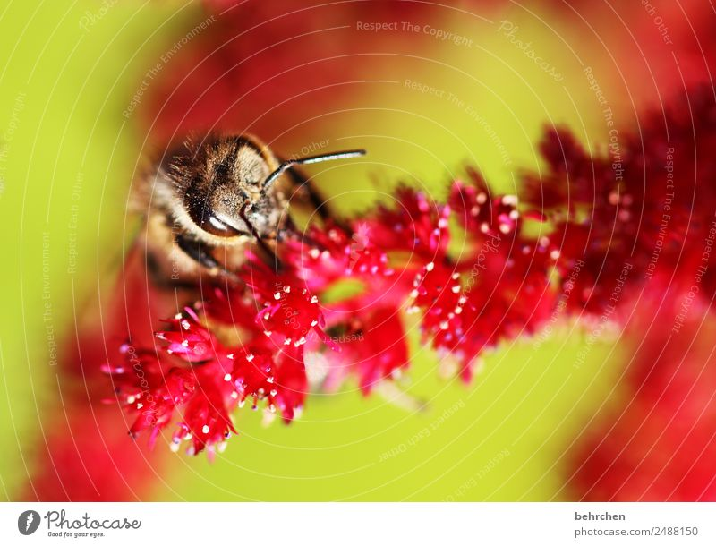 from above Nature Plant Animal Summer Flower Blossom Genus Astilbe Garden Meadow Wild animal Bee Animal face Wing 1 Blossoming Fragrance Flying To feed
