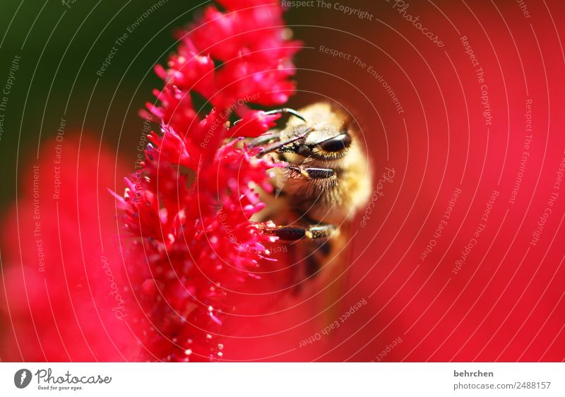 small importance Nature Plant Animal Flower Blossom Genus Astilbe Garden Meadow Wild animal Bee Animal face Wing 1 Blossoming Fragrance Flying To feed Beautiful