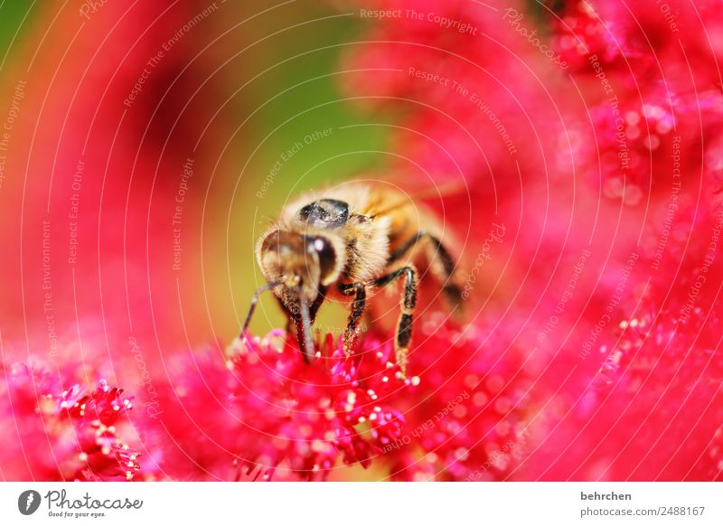 Nature Summer Beautiful Red Flower Animal Blossom Meadow Garden Pink Flying Park Wild animal Blossoming Wing Bee