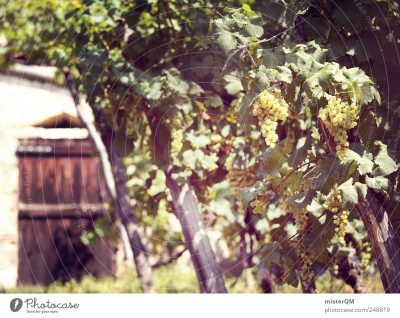 Winery. Environment Esthetic Vine Vineyard Bunch of grapes Grape harvest Wine cellar Wine growing Italy Quality Wine press Green Colour photo Subdued colour