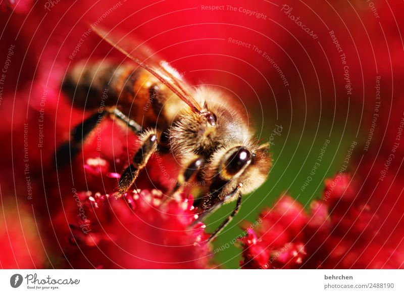 Nature Summer Plant Beautiful Flower Red Animal Blossom Garden Pink Flying Park Wild animal Blossoming Wing Bee