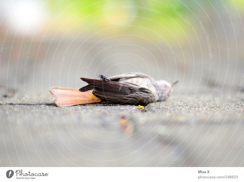 Animal Street Death Lanes & trails Sadness Bird Grief Feather Wild animal Wing Sparrow Dead animal