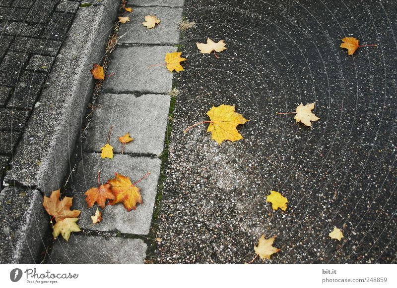 Gold easily fallen... Environment Autumn Climate Lie conceit chill Yellow Gray Black Transience Street Pavement Sidewalk Slippery surface Risk of accident