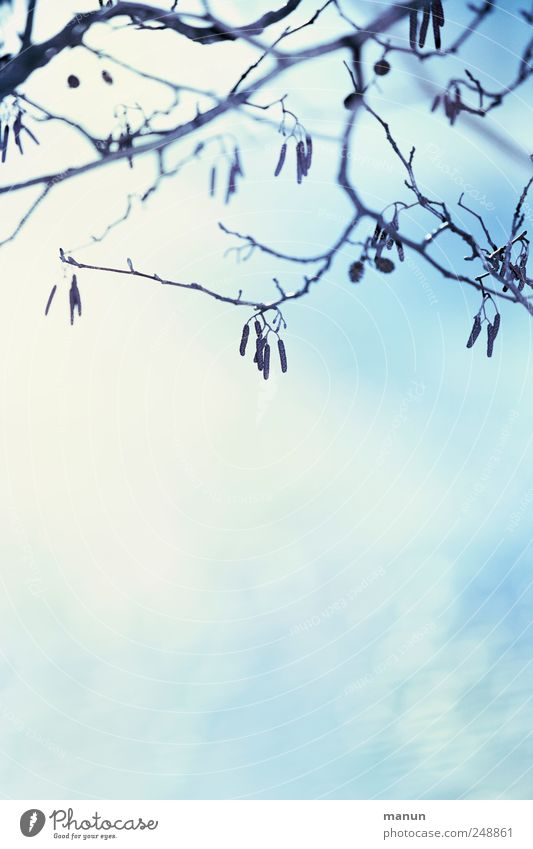 Nature Blue White Winter Autumn Natural Snow Bright Authentic Bushes Branch Simple Autumnal Twigs and branches