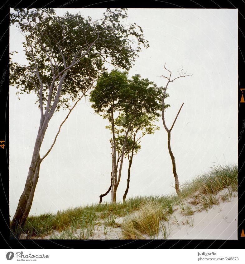 Nature Tree Plant Beach Ocean Landscape Environment Grass Coast Natural Wild Baltic Sea Darss Western Beach