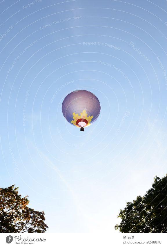 Sky Tree Summer Tall Flying Aviation Driving Illuminate Vantage point Hot Air Balloon Blue sky Balloon flight Balloon basket