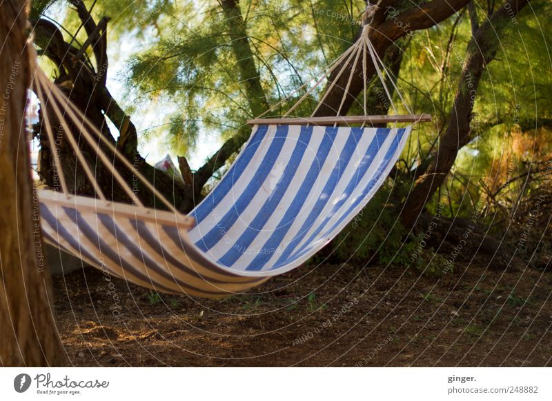 Relaxing location Line Relaxation Hammock Suspended Attach Break Rope Rag sag Tree Tree trunk Chained up Free unmanned Shadow Leisure and hobbies Resting point