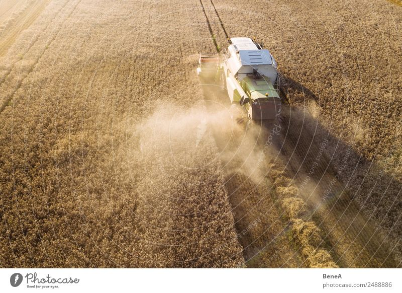 Nature Plant Landscape Environment Grass Work and employment Field Growth Technology Agriculture Farm Harvest Grain Economy Farmer