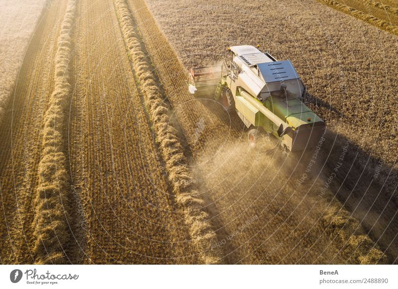 Combine harvester harvests grain field in the evening light from the air Harvest Driving Farmer Agriculture Forestry Machinery Agricultural machine Environment