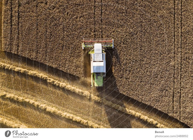 Combine harvester harvests grain field in the evening light from the air Harvest Farmer Agriculture Forestry Machinery Agricultural machine Environment Nature