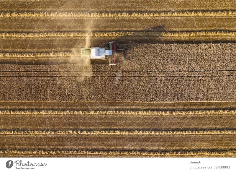 Combine harvester harvests a grain field in the evening light from the air Agriculture Forestry Machinery Environment Nature Landscape Plant Climate