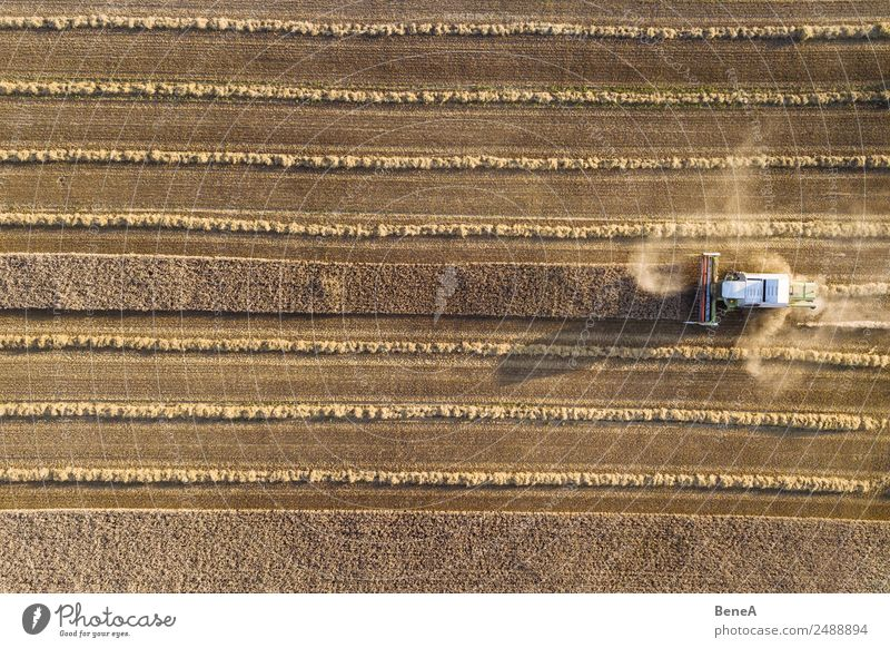 Combine harvester harvests a grain field in the evening light from the air Machinery Agricultural machine Tractor Technology Environment Nature Landscape Plant