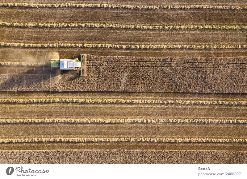 Combine harvester harvests grain field in the evening light from the air Harvest Farmer Machinery Agricultural machine Environment Nature Landscape Plant
