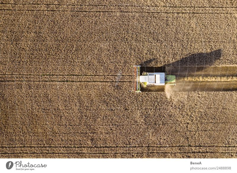 Combine harvester harvests grain field in the evening light from the air Farmer Harvest Agriculture Forestry Machinery Agricultural machine Environment Nature