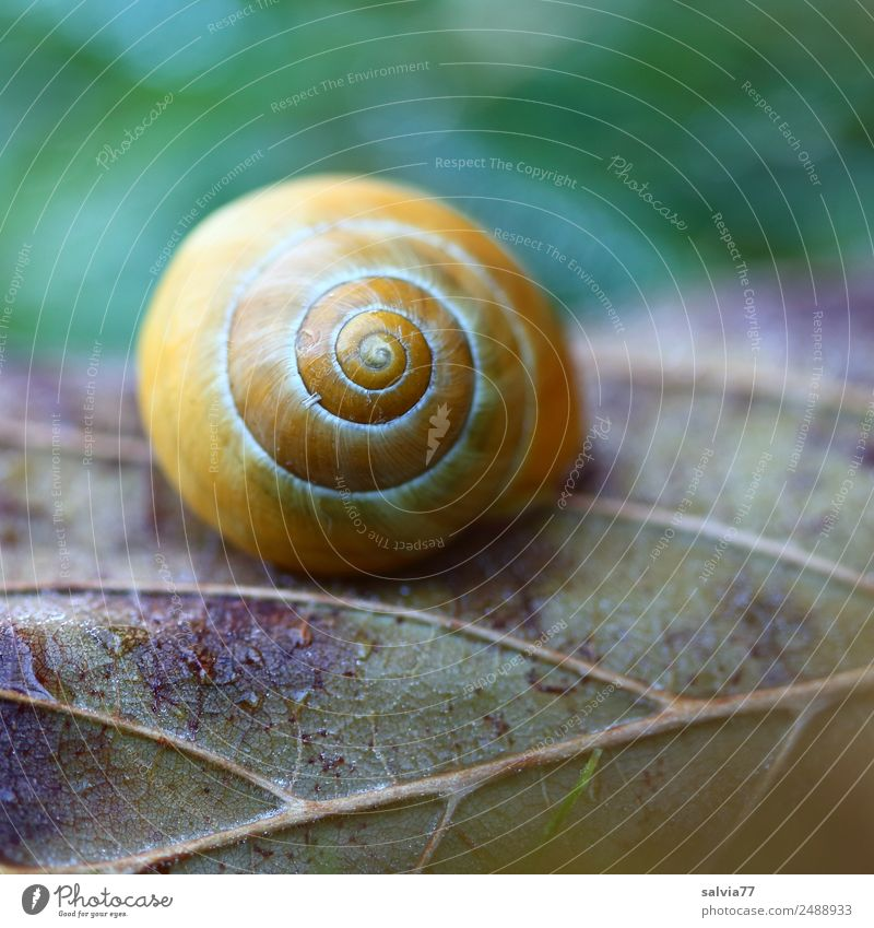 lifelines Nature Earth Autumn Plant Leaf Rachis Field Forest Snail Snail shell Esthetic Round Brown Yellow Green Beginning Design Protection Symmetry Change