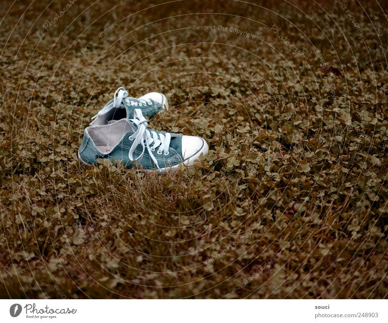 trip Leisure and hobbies Vacation & Travel Freedom Summer Garden Nature Plant Earth Autumn Grass Meadow Cloth Footwear Sneakers Walking Blue Brown Green White