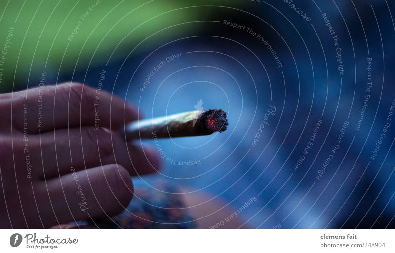 Want some? Smoking Intoxicant Relaxation Summer Hand Joint Embers Cigarette Meadow Colour photo Exterior shot Twilight Shallow depth of field