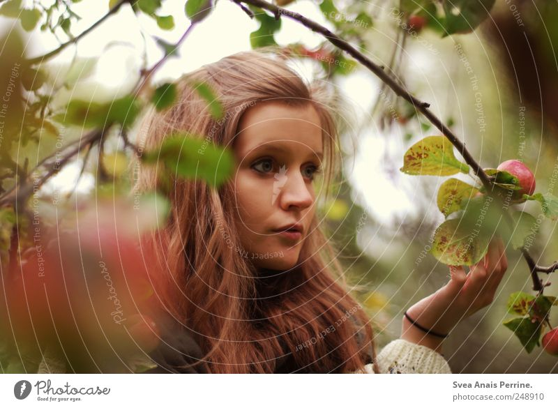 apple tree. Feminine Young woman Youth (Young adults) Hair and hairstyles 1 Human being 18 - 30 years Adults Tree Apple tree Branch Branched Sweater Brunette